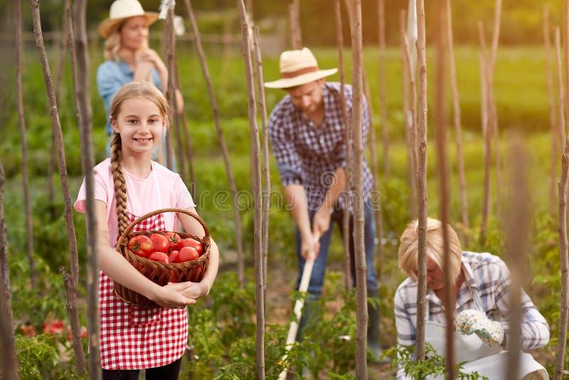 Dziewczyna w ogrodowym chwyta koszu z pomidorami obrazy stock