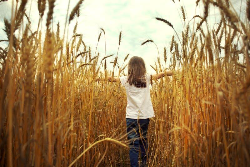 Dziewczyna w polu na zmierzchu tle obraz royalty free