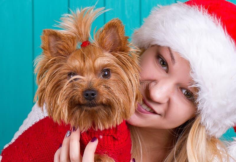 Dziewczyna w Santa nakrętce z yorkie psem w czerwonym pulowerze fotografia royalty free