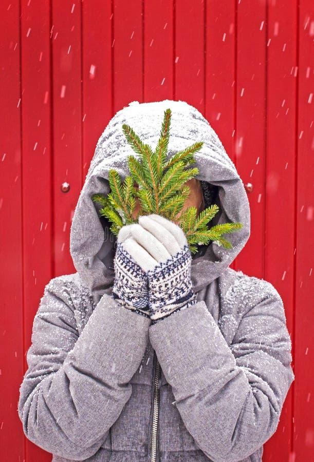Dziewczyna w trykotowych rękawiczkach z ornamentu chwytem gałąź drzewo jedlina na czerwonym tle dekoracje świąteczne ekologiczneg obraz royalty free