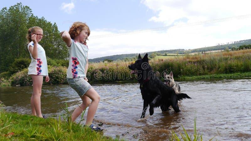 Dziewczyny bawić się z psami rzeką fotografia royalty free