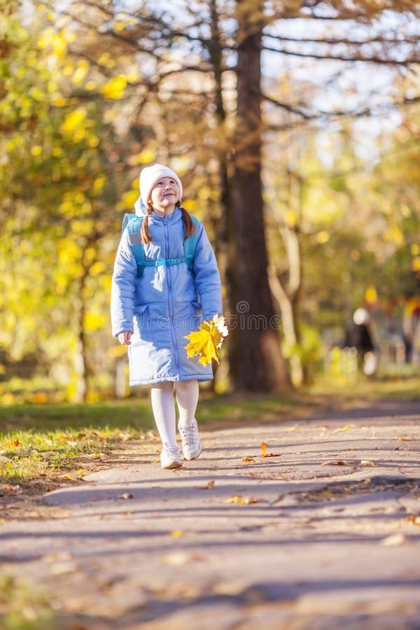 Dziewczyny mienia liście klonowi obraz stock