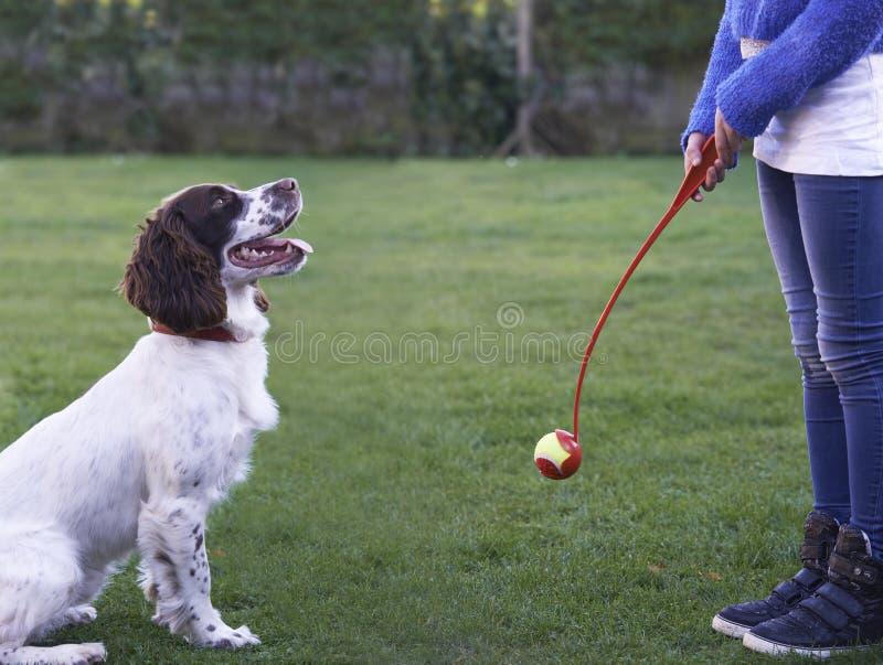 Dziewczyny miotania piłka Dla zwierzę domowe spaniela psa W ogródzie obraz stock