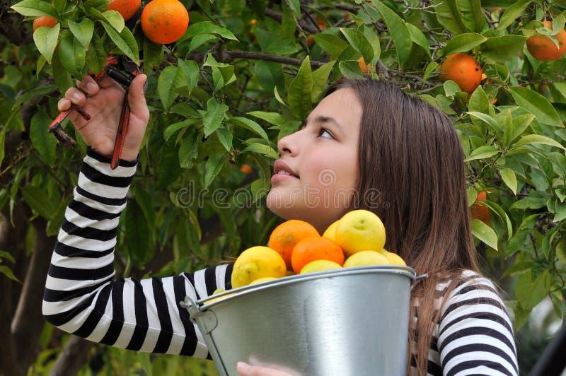 dziewczyny pomarańcz target1140_1_ zdjęcia royalty free