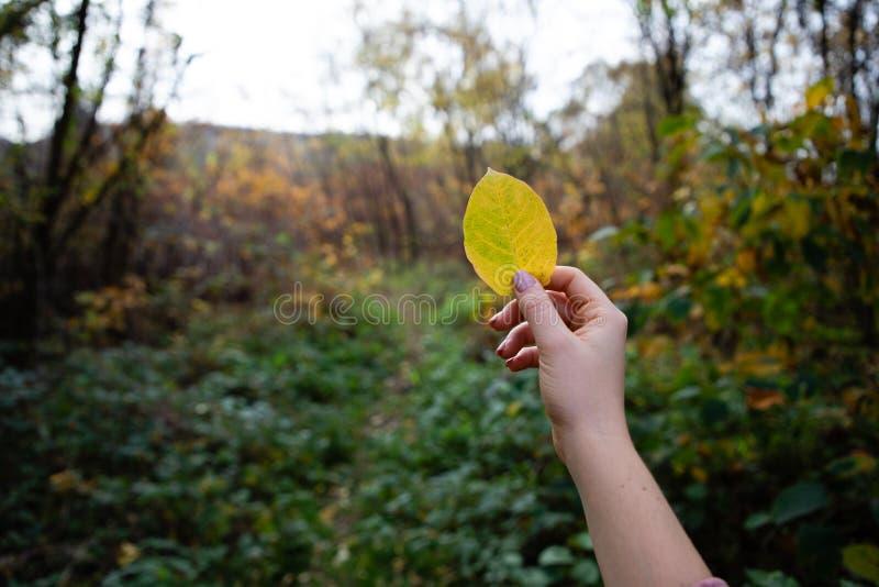 Dziewczyny ręka trzyma żółtego urlop z lasem w tle obrazy royalty free