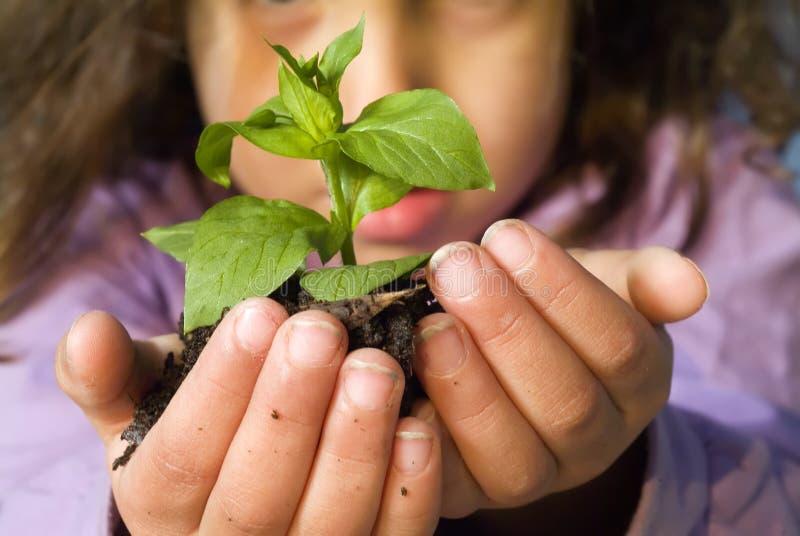 dziewczyny roślinnych gospodarstwa obraz stock