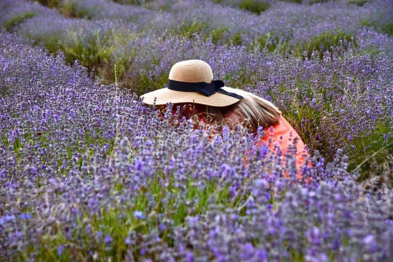 Dziewczyny zrywanie kwitnie w lawendy polu w lecie przy świtem w kapeluszu, romantycznym obraz royalty free