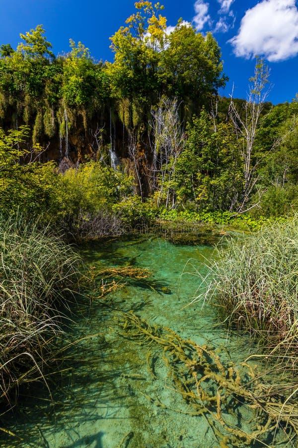 Dziewicza natura Plitvice jeziora parki narodowi, Chorwacja zdjęcie stock