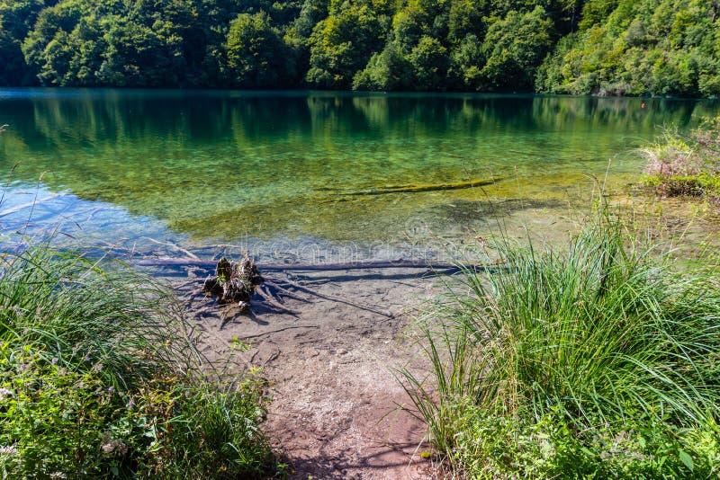 Dziewicza natura Plitvice jeziora parki narodowi, Chorwacja fotografia stock