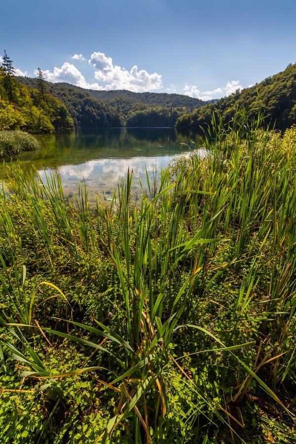 Dziewicza natura Plitvice jeziora parki narodowi, Chorwacja zdjęcia stock