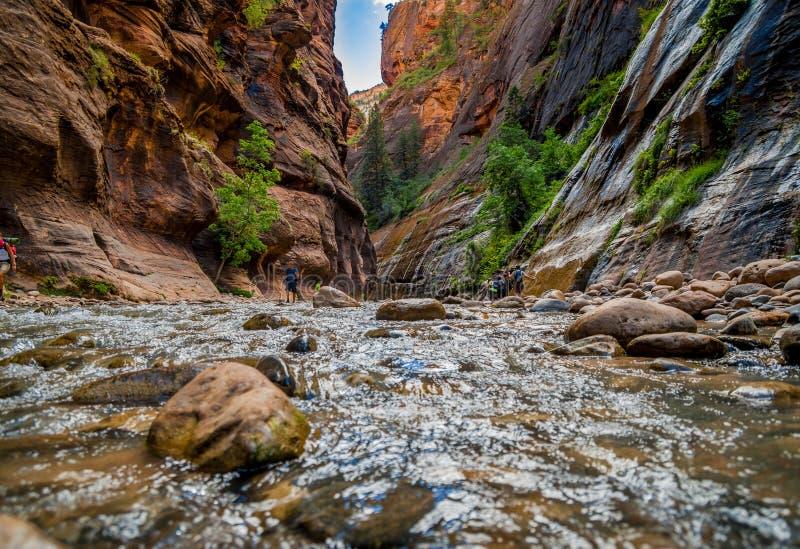 Dziewicza rzeka w zion parku narodowym Utah obraz stock