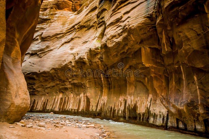 Dziewicza rzeka w zion parku narodowym Utah fotografia royalty free