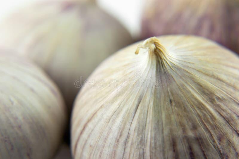 Dzika czosnek cebula