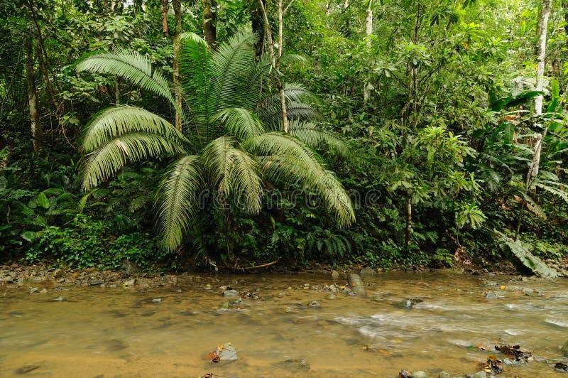 Dzika Darien dżungla obrazy royalty free