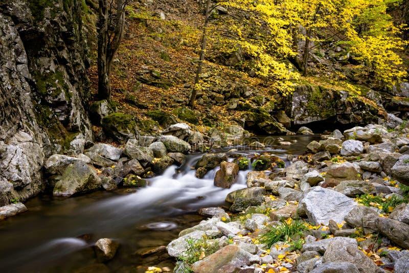 Dzika halna rzeka z małą siklawą w spadku zdjęcia royalty free