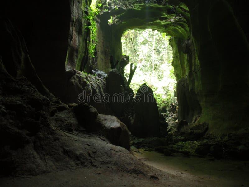 dzika jamy dżungla zdjęcia royalty free