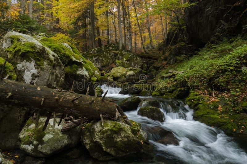 Dzika jesień zdjęcia stock