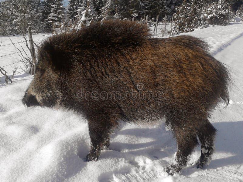 dzika natura rosyjskiego terenu wilder voronezh zdjęcia stock