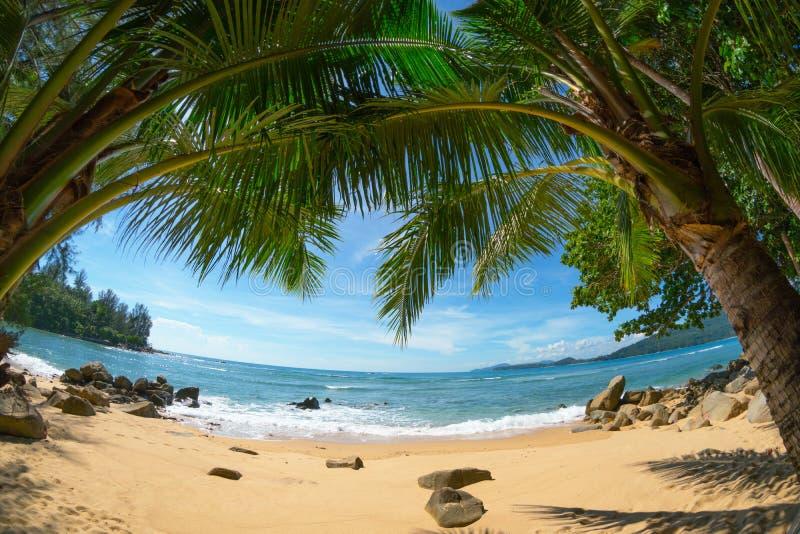 Dzika opustoszała plaża z kokosowymi palmami fisheye strzał Phuket, Th obraz stock