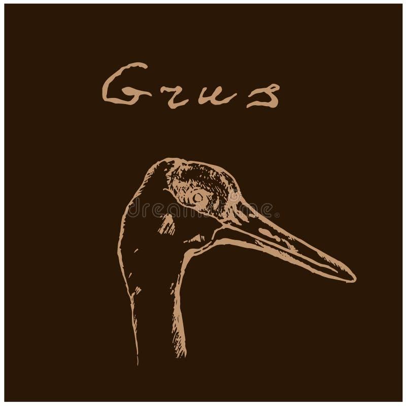 Dzika ptak głowa na czarnym tle Zwierz?ta w naturze w niebie lub Żurawie lub popielaci piórka czerwień i przewodzą royalty ilustracja