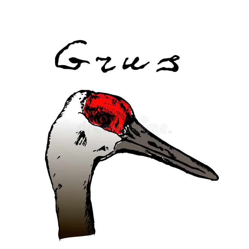 Dzika ptak głowa Zwierz?ta w naturze w niebie lub Żurawie lub popielaci piórka czerwień i przewodzą Grawerująca nakreślenie ręka  royalty ilustracja