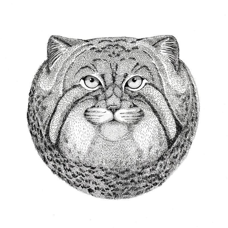 Dzika ręka rysująca kota Manul ilustracja dla tatuażu, emblemat, odznaka, logo, łata ilustracja wektor