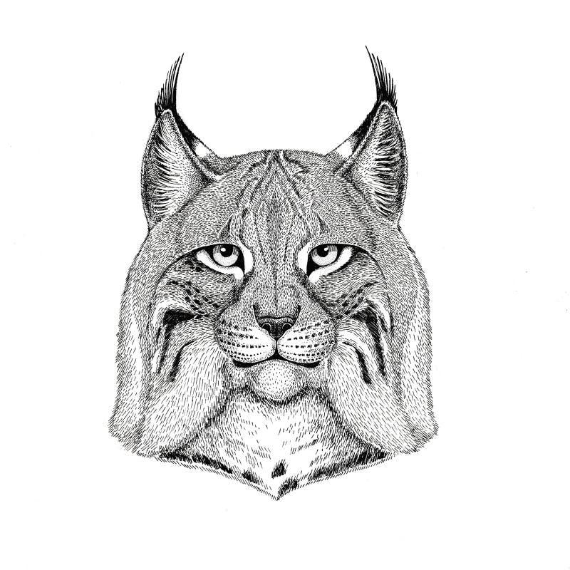 Dzika ręka rysująca kota rysia rysia rudy bryka ilustracja dla tatuażu, emblemat, odznaka, logo, łata Odizolowywająca na białym t royalty ilustracja