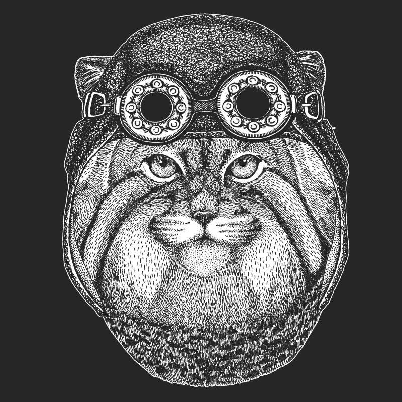 Dzika ręka rysujący kota Manul wizerunek dla tatuażu, emblemat, odznaka, logo, łata Chłodno zwierzęcego jest ubranym lotnika, mot ilustracji