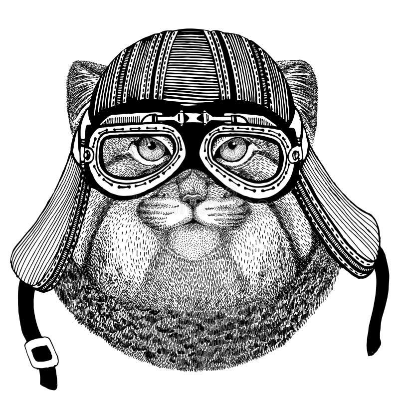 Dzika ręka rysujący kota Manul wizerunek zwierzęcy jest ubranym motocyklu hełm dla koszulki, tatuaż, emblemat, odznaka, logo, łat royalty ilustracja