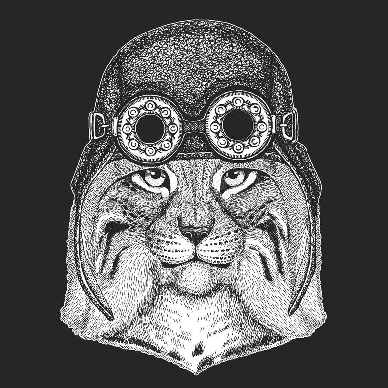 Dzika ręka rysujący kota rysia rysia rudy bryka wizerunek dla tatuażu, emblemat, odznaka, logo, łata Chłodno zwierzęcego jest ubr ilustracja wektor