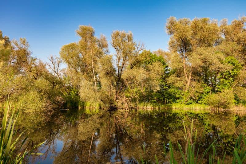 Dzika rzeka obraz stock