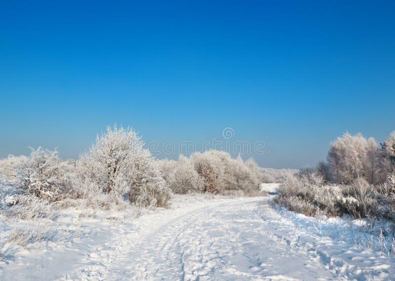 dzika scenerii zima zdjęcia royalty free