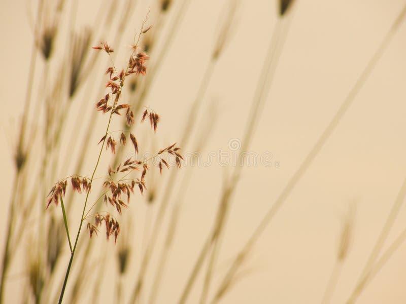 dzika trawa obraz stock