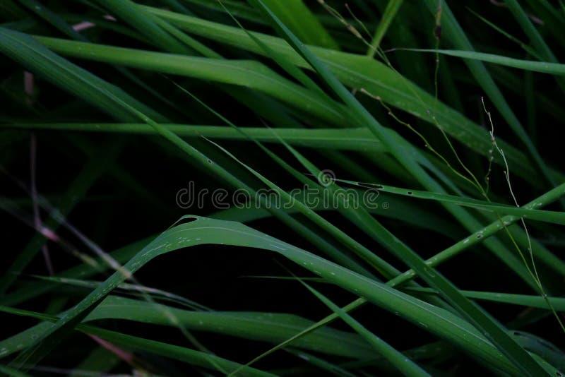 Dzika trawa opuszcza dorośnięcie w polu z ciemnym tłem fotografia royalty free
