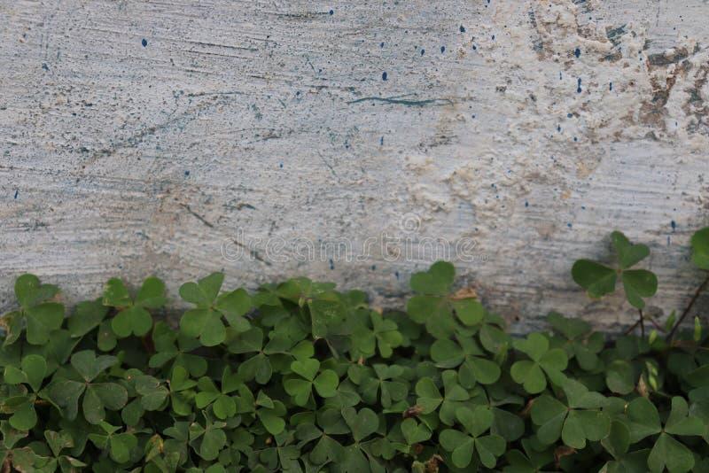 Dzika trawa przeciw białemu ściennemu tłu Zielony krzak liść obrazy royalty free