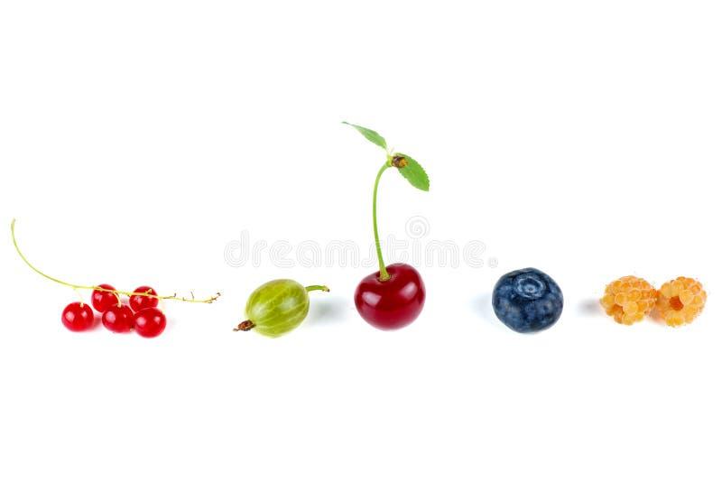 Dzika wiśnia, porzeczki czerwone, zielona agrest, malina żółta i borówka izolowana obraz stock