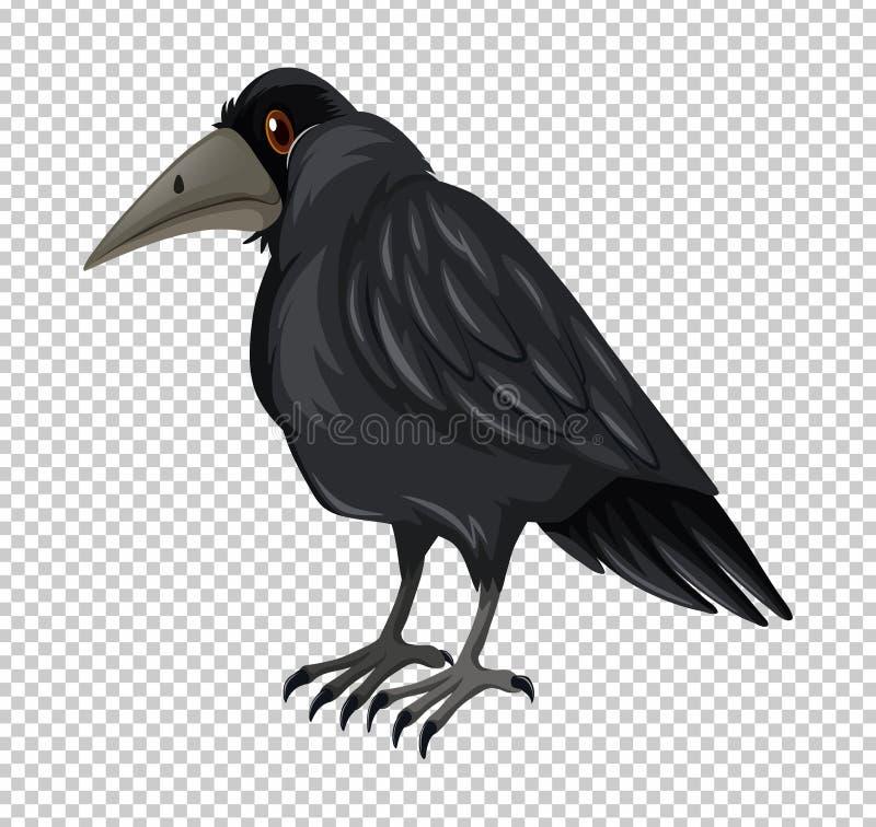 Dzika wrona na przejrzystym tle ilustracji