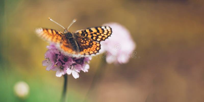 Dziki łąkowy kwiat z motylem na natury tle Delikatny wizerunek z pastelowymi kolorami miękkie ogniska, zdjęcie stock