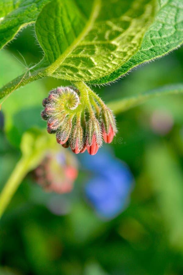 Dziki błękit, purle, menchia kwitnie jak dzwon i pączkuje na lato łące dzikie kwiaty zdjęcie stock
