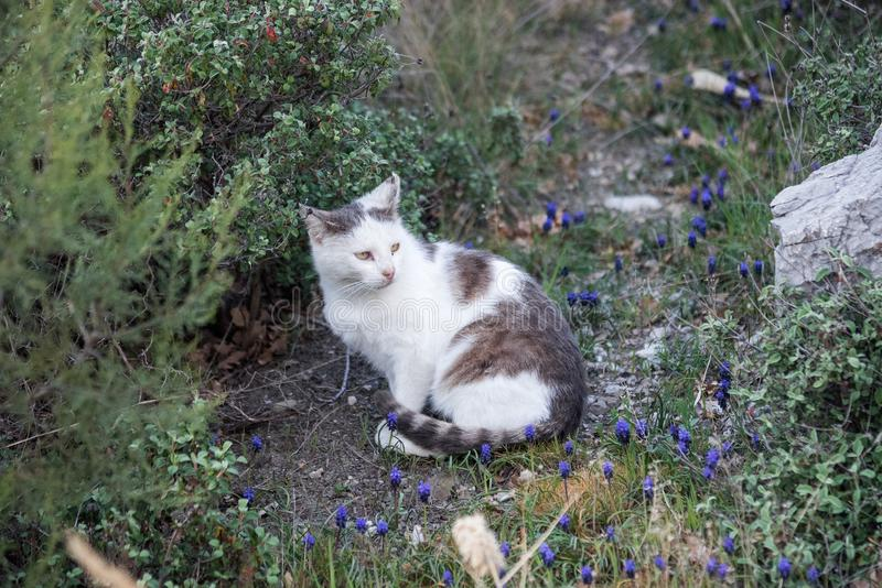Dziki bezdomny obszarpywał kota spacer w naturze na południowym wybrzeżu Crimea półwysep obrazy stock
