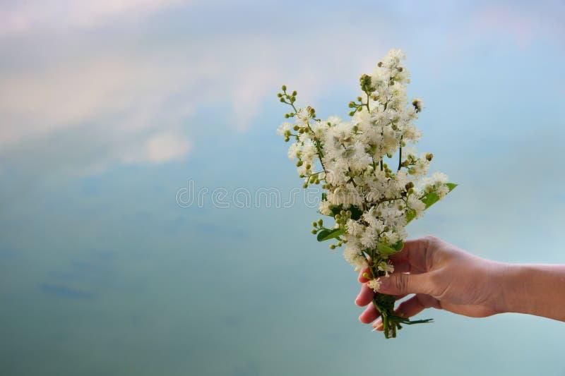 Dziki bukiet białego kwiatu mienie w kobiety ręce z błękitne wody lata natury jeziornym tłem zdjęcia stock