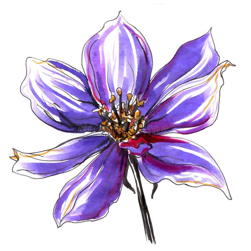 Dziki clematis kwiat szczotkarski węgiel drzewny rysunek rysujący ręki ilustracyjny ilustrator jak spojrzenie robi pastelowi trad ilustracji