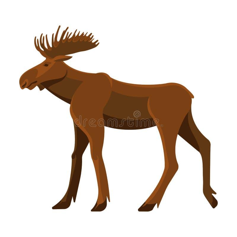 Dziki dorosły łoś amerykański z dużymi gałęzistymi rogami i silnymi nogami ilustracja wektor