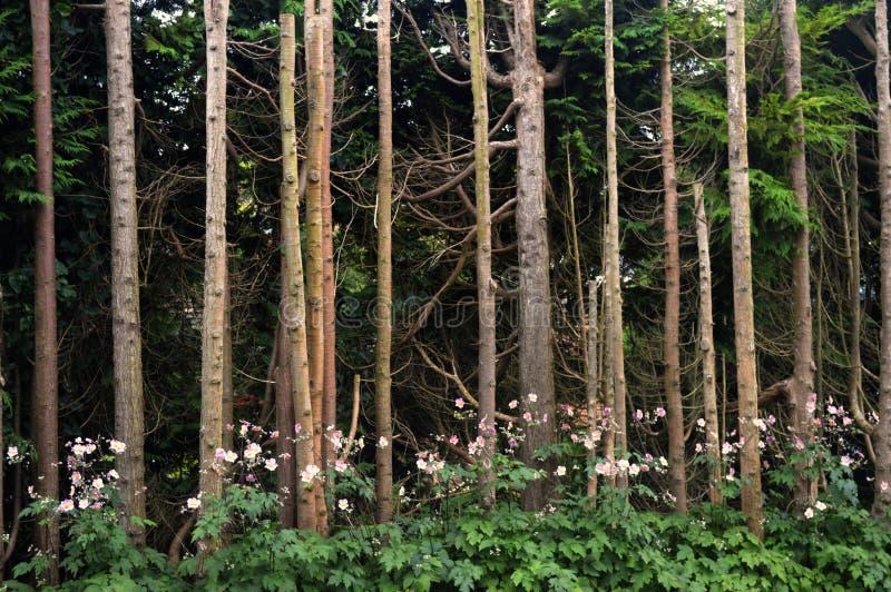 Dziki Drzewny ` s zdjęcia stock