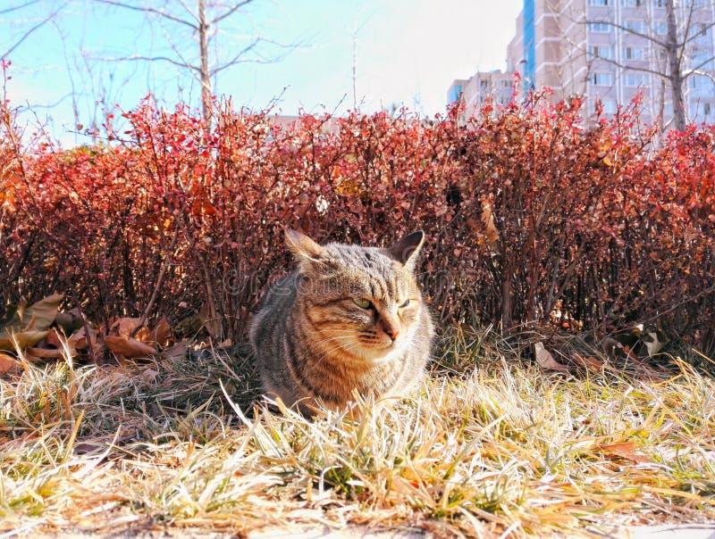 Dziki gniewny kot obrazy royalty free