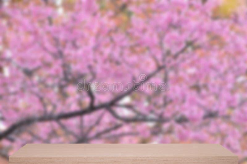 Dziki himalajski czereśniowy kwiatu defocus tło z drewnianą półką zdjęcia stock