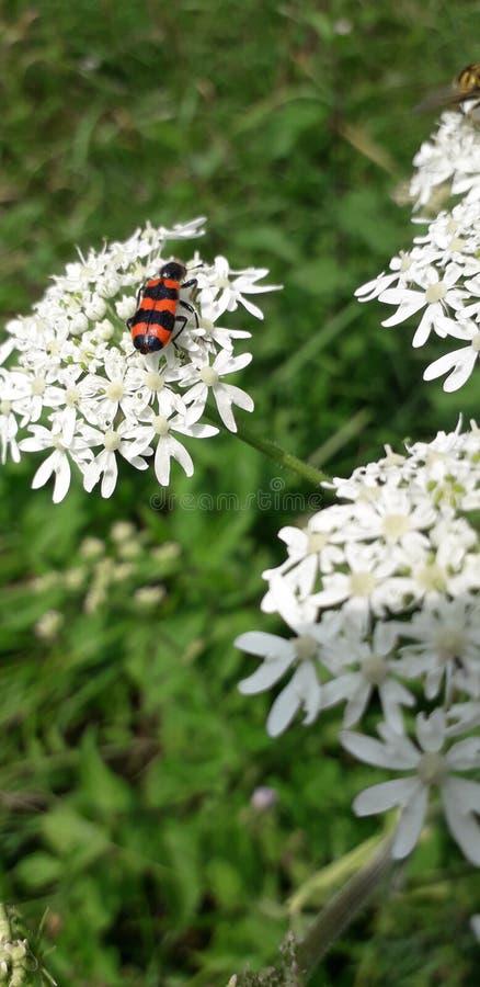 Dziki insekt obrazy royalty free
