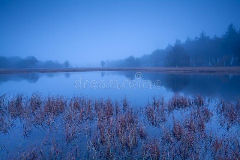 Dziki jezioro w mglistym półmroku fotografia royalty free