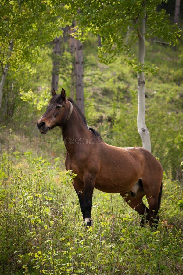 Dziki koń w drewnach zdjęcia stock