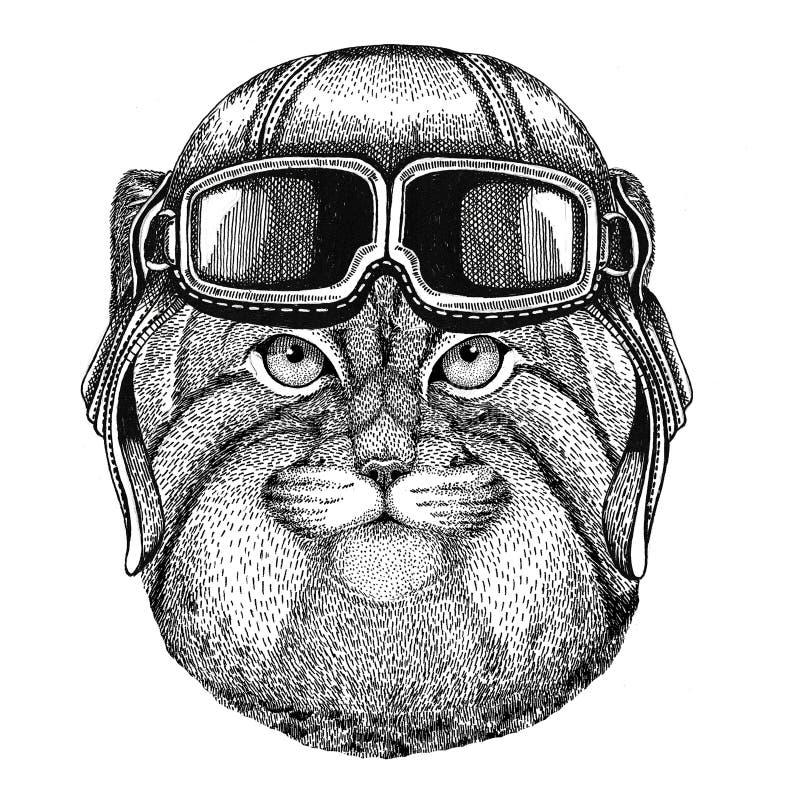 Dziki kot Manul jest ubranym rzemiennego hełma lotnika, rowerzysta, motocykl ręka rysująca ilustracja dla tatuażu, emblemat, odzn ilustracji